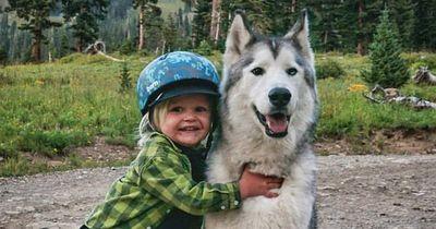 Er sieht die Trauer im Auge seines Hundes und tut etwas Unglaubliches