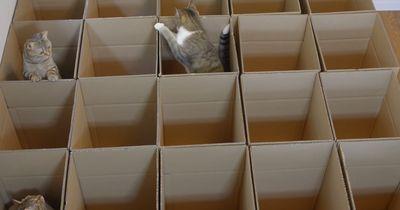 Diese Katzen bekamen ein eigenes Zimmer - Für ihre größte Leidenschaft!