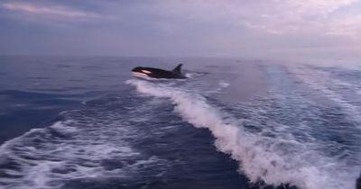 Auf offener See wird er von diesem Tier verfolgt - Unbeschreiblich!