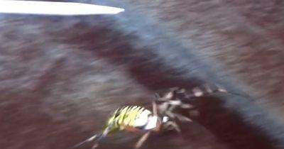 Tödliches Tier krabbelt aus Blumenkiste...