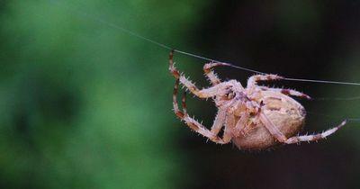 Wie man Spinnen aus der Wohnung fern hält