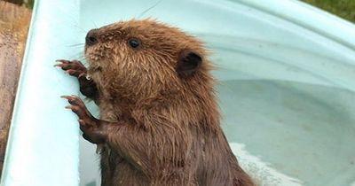 Diese Tiere sind total süß und absolut tödlich!