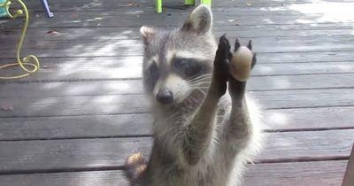 Was dieses Tier da macht, ist echt verrückt!