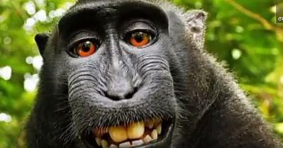 Klage gegen einen Affen