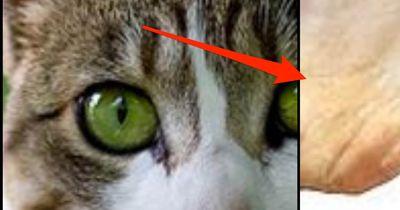 Das dürfen Katzen auf keine Fall fressen!