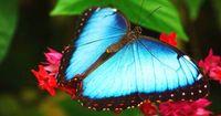 Knallig, farbenfroh, skurril: Die buntesten Tiere der Welt!