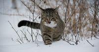 Darum landen Katzen immer auf 4 Pfoten