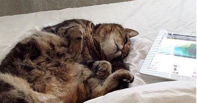 Diese 5 Dinge macht deine Katze, wenn du nicht da bist!