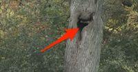 Sie hörten Schreie aus diesem Baum. Ihr glaubt nicht, wer darin gefangen war!