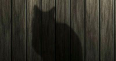 Was denken Katzen wirklich über uns Menschen?