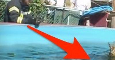 Ein eigenartiger Fund im Pool