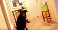 Achtung, unheimlicher Hund!