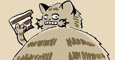 Übergewicht bei Katzen: Was hilft?