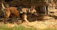 Die Top 5 der Schutzhunde!
