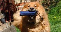 Wie steht es um den IQ eures Hundes? Macht den Test!