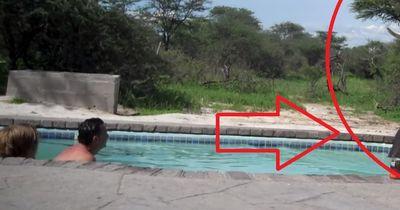 Sie bekamen extrem seltene Gesellschaft im Pool: Vorbildliches Verhalten zwischen Mensch und Tier!