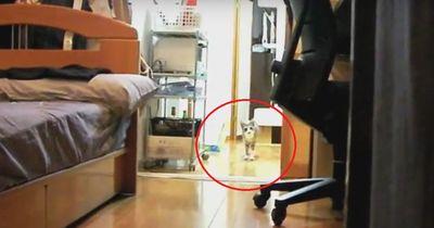 Diese Katze ist echt unheimlich!