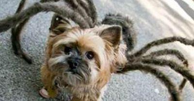 Für diese Hunde kann Halloween kommen! Gerade Bild 3 ist zum Niederknien!