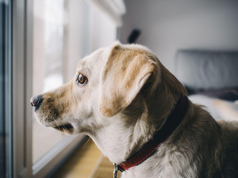 erlaubnis hunde mietwohnung
