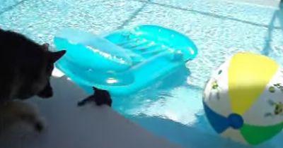 Als er sah, dass sein kleiner Freund ins Wasser fiel...
