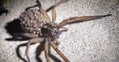 Nach diesen 5 Fakten denkst du ganz anders über Spinnen!