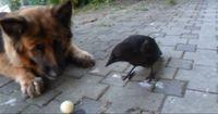 Zwei ungewöhnliche Spielkameraden