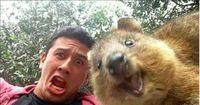 Die lustigsten Tier-Selfies im Netz