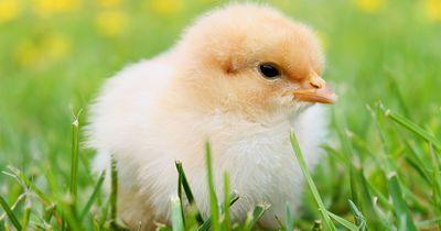 Ein wahnsinniger Fortschritt im Tierschutz