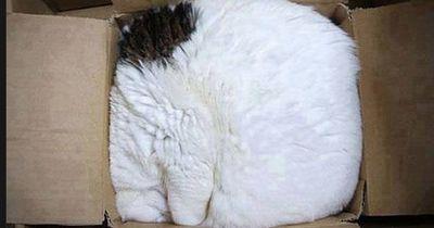 Katzen lieben Schachteln