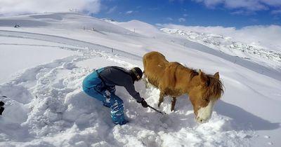 Dramatische Rettung: Pferd verirrt sich auf Gletscher!