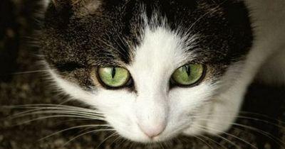 Wie du deine Katze zu einem wahren Engel verwandelst