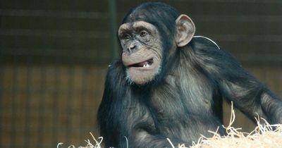 Verrückte Tierwelt: Diese seltsamen Verhaltensweisen gibt es wirklich!