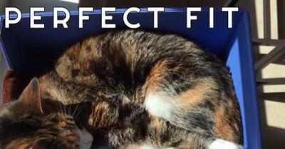 Die brandneue Cat Box ist die Lösung für alle Katzenprobleme!