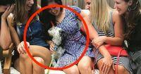 5 Gründe, warum Hunde die besten Gäste auf eurer Party sind!