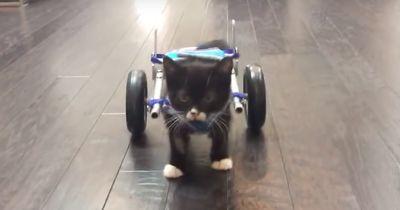 Die kleine Katze mit 2 Beinen...