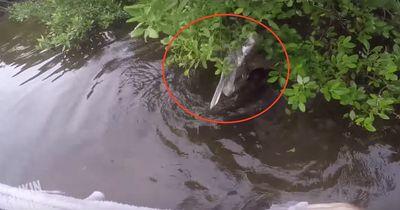 Dieser Tierfreund rettet einen Pelikan!