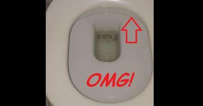Du solltest ab sofort IMMER zuerst unter deinen Toilettensitz schauen!