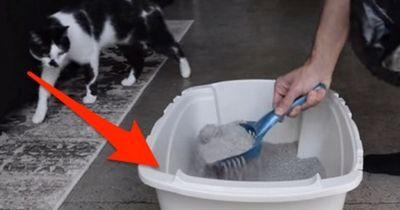 Diesen Fehler machen die meisten Leute beim Reinigen des Katzenklos!