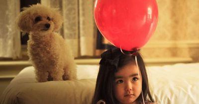 So klappt es mit Baby und Hund