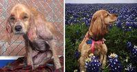 Diese Hunde wurden gerettet