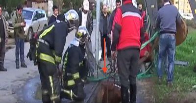 Diese Feuerwehrmänner sind wahre Helden