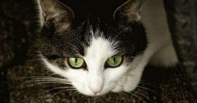 Was musst du bei deiner freilaufenden Katze beachten?