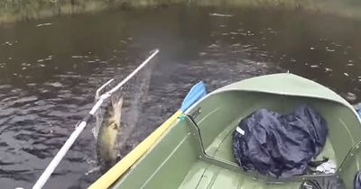 Fette Beute: Diesen Fisch hätte er wohl besser nicht ins Boot geholt!