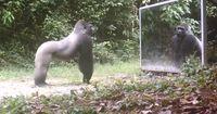 Ein Spiegel mitten im Urwald: So reagieren wilde Tiere, wenn sie sich selbst sehen!