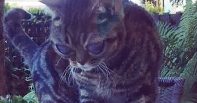 Die Katze mit den riesigen Augen