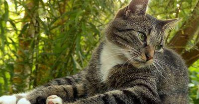Wusstest du das über die Sinne deiner Katze?