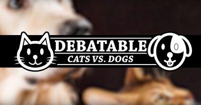 Katzen oder Hunde - was ist wirklich besser?