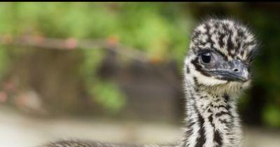 Diese kleinen Tiere sehen ihren Eltern gar nicht ähnlich!