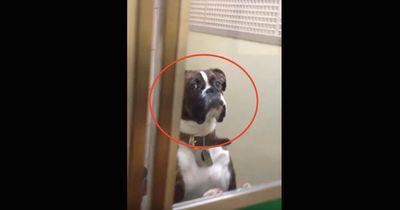 Er holt seinen Hund beim Tierarzt ab...