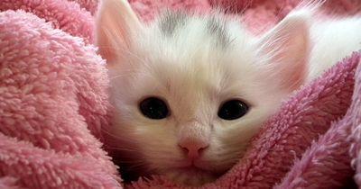 Die Top 5 der Dinge, die Katzen lieben